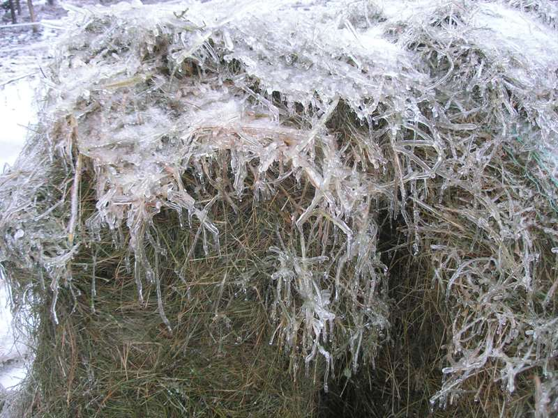 Ice Dec1208 hay