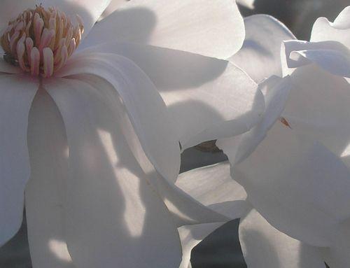 M Flower close