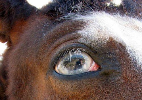 Cowboy blue eye