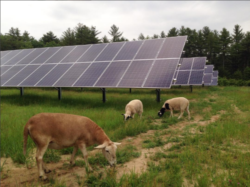 Grazing solar array062017