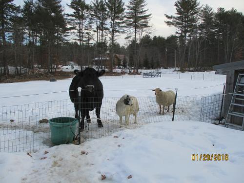 Sheepscott and company 1292018